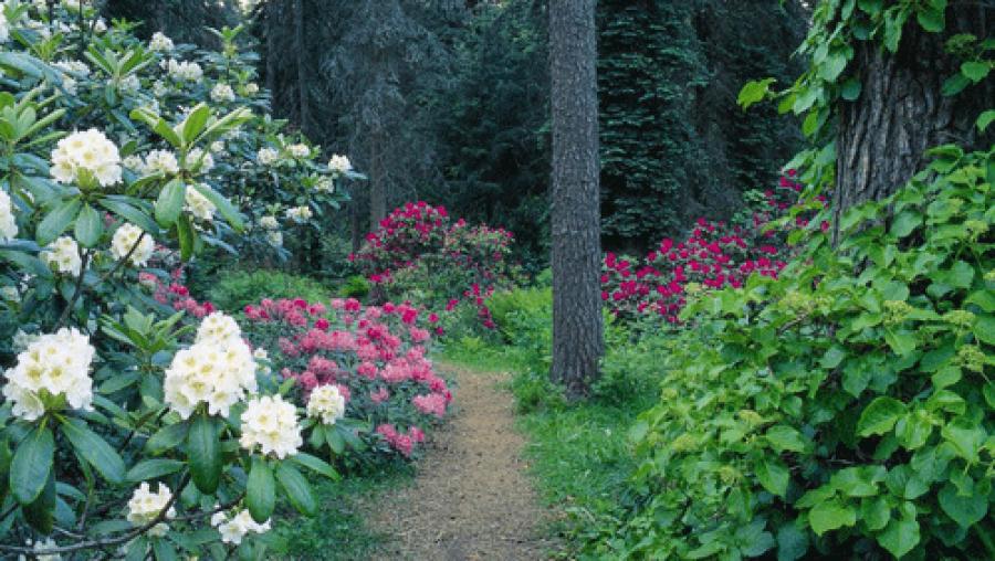 Arboretum ja Moision kartano Elimäellä 1